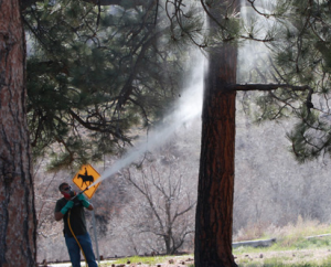 Colorado Tree Arborist